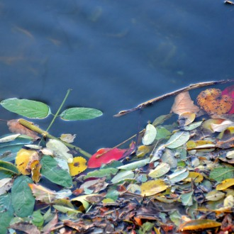 Les feuilles d'automne dans le Gardon